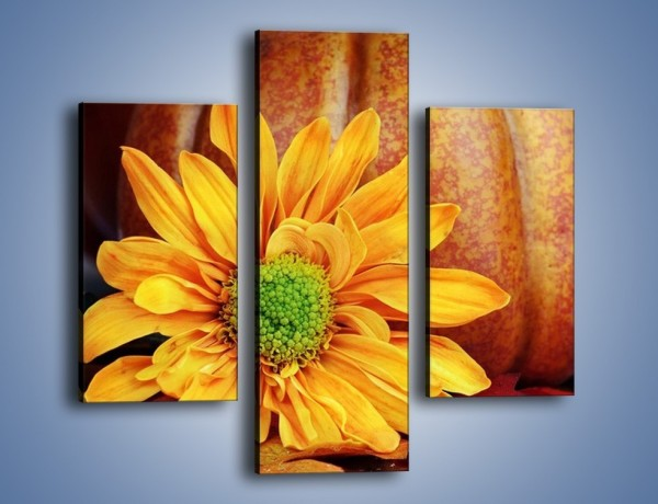 Obraz na płótnie – Dynia z kwiatem – trzyczęściowy K386W3