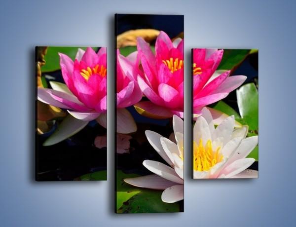 Obraz na płótnie – Pływające kwiaty – trzyczęściowy K392W3