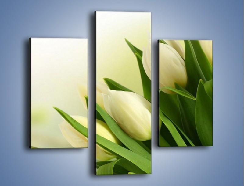 Obraz na płótnie – Białe tulipany na zgodę – trzyczęściowy K400W3