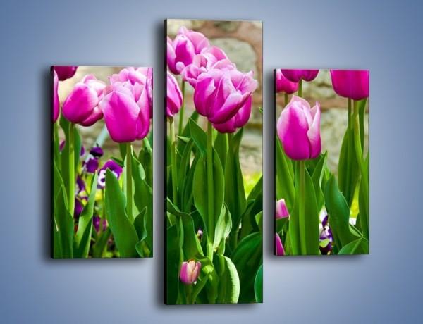 Obraz na płótnie – Tulipany w domowym ogródku – trzyczęściowy K409W3