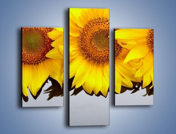 Obraz na płótnie – Najpiękniejsza odsłona słoneczników – trzyczęściowy K416W3