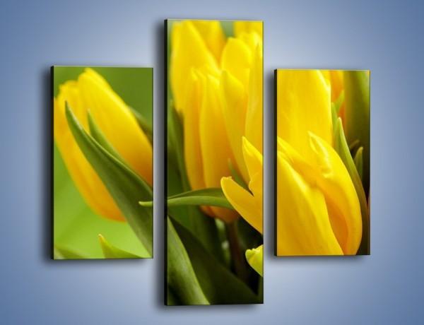 Obraz na płótnie – Słońce schowane w tulipanach – trzyczęściowy K424W3