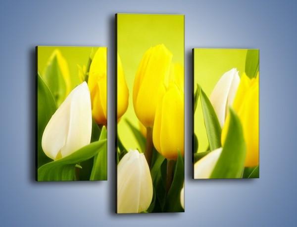 Obraz na płótnie – Nie tylko tulipany – trzyczęściowy K425W3