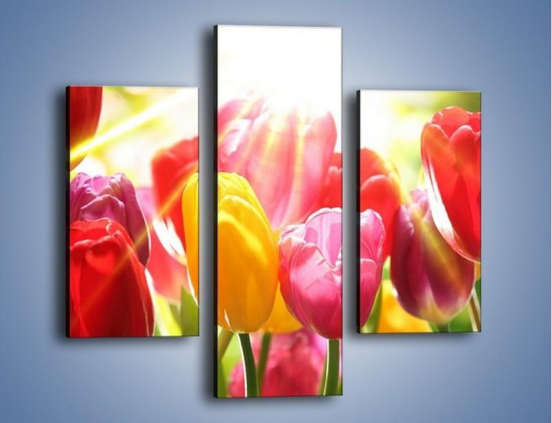 Obraz na płótnie – Bajecznie słoneczne tulipany – trzyczęściowy K428W3