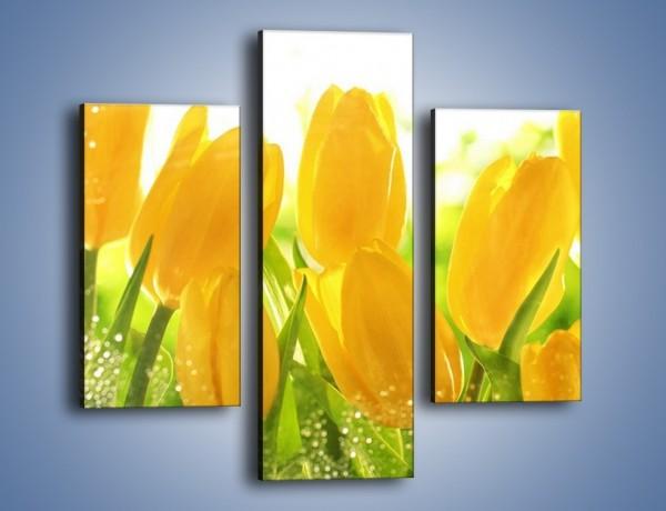 Obraz na płótnie – Skąpane w rosie tulipany – trzyczęściowy K429W3