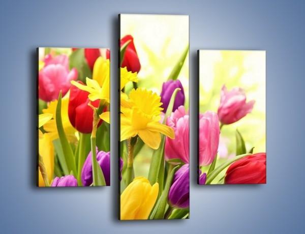 Obraz na płótnie – Żonkile wśród tulipanów – trzyczęściowy K430W3