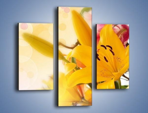 Obraz na płótnie – Pospolita lilia – trzyczęściowy K454W3