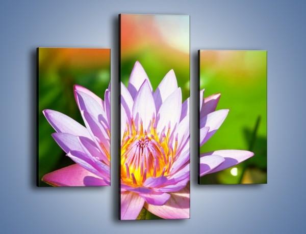 Obraz na płótnie – Wesoły kwiat w słońcu – trzyczęściowy K455W3