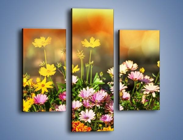 Obraz na płótnie – Polne kwiaty z uśmiechem – trzyczęściowy K456W3