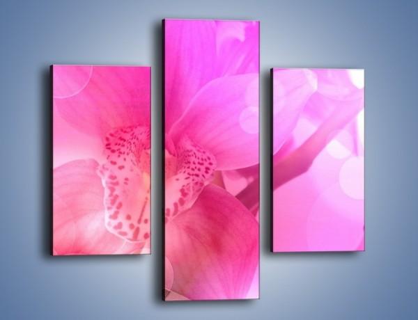 Obraz na płótnie – Budzący dzień w różowym kwiecie – trzyczęściowy K487W3