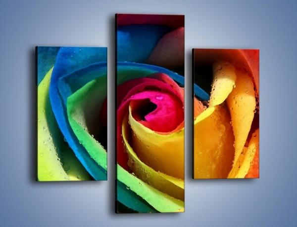 Obraz na płótnie – Kolory tęczy w róży – trzyczęściowy K503W3