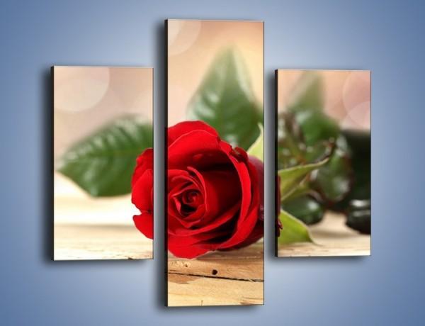 Obraz na płótnie – Stęskniona róża – trzyczęściowy K505W3