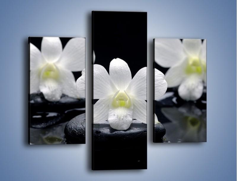 Obraz na płótnie – Biel w kwiecie nocą – trzyczęściowy K512W3