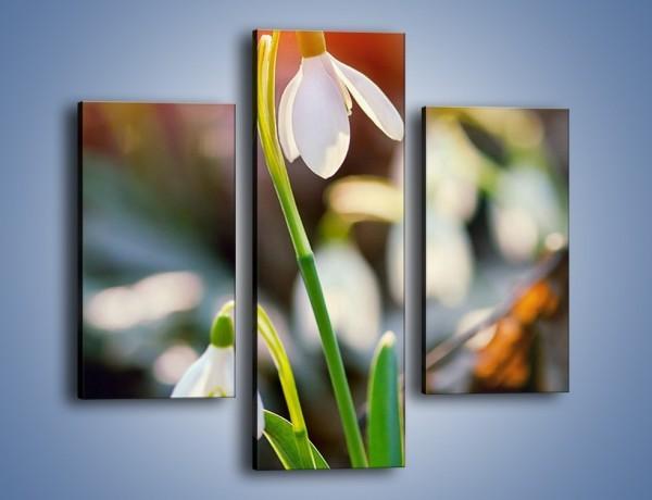 Obraz na płótnie – Mały kwiatek w słońcu – trzyczęściowy K518W3