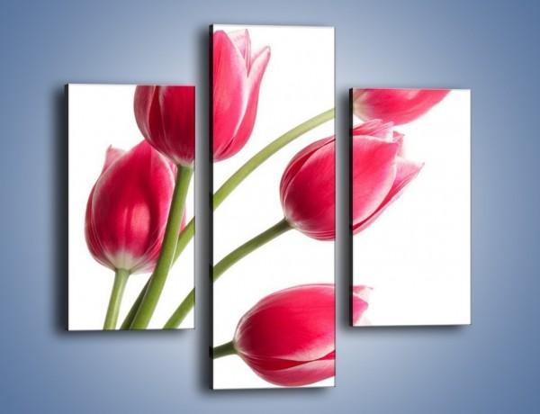 Obraz na płótnie – Pięć razy tulipany – trzyczęściowy K551W3