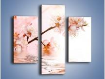 Obraz na płótnie – Blask kwiatów jabłoni – trzyczęściowy K569W3
