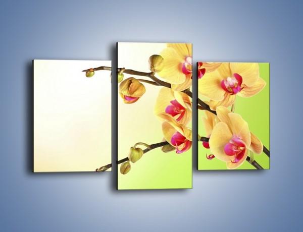Obraz na płótnie – Kwiat na limonkowym tle – trzyczęściowy K650W3