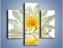 Obraz na płótnie – Biel z pomarańczą w kwiecie – trzyczęściowy K674W3