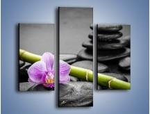 Obraz na płótnie – Bambus czy storczyk – trzyczęściowy K686W3