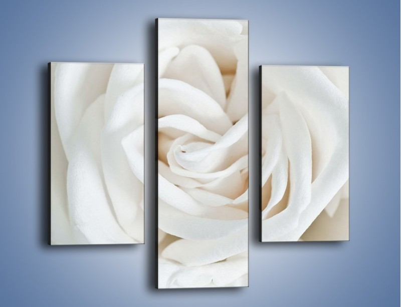 Obraz na płótnie – Biel róży za dnia – trzyczęściowy K709W3