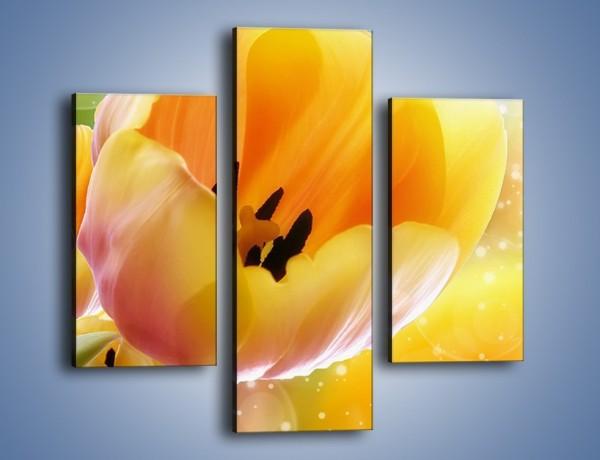 Obraz na płótnie – Tulipan jak sen – trzyczęściowy K776W3