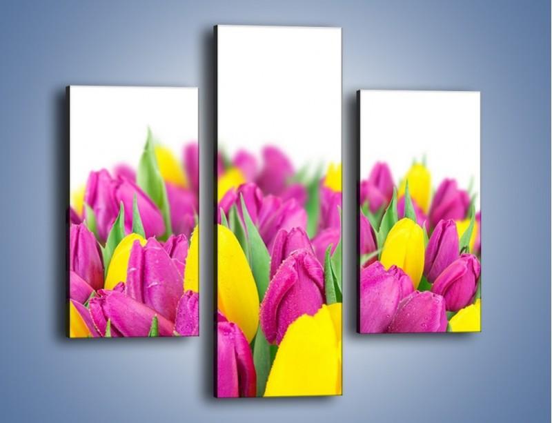 Obraz na płótnie – Bukiet fioletowo-żółtych tulipanów – trzyczęściowy K778W3