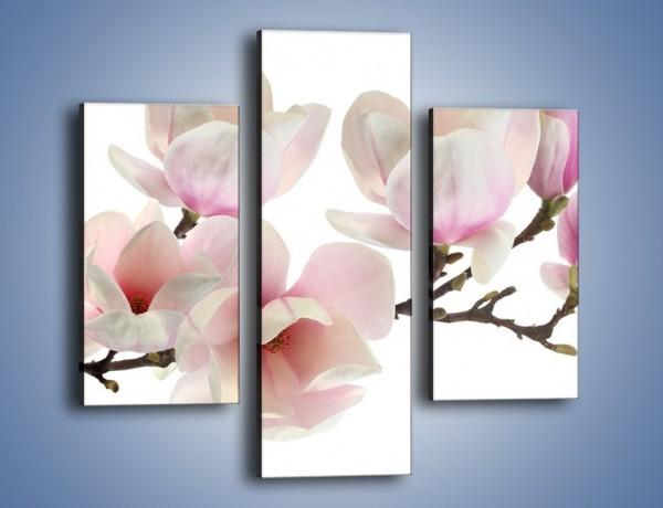 Obraz na płótnie – Zerwana gałązka magnolii – trzyczęściowy K780W3