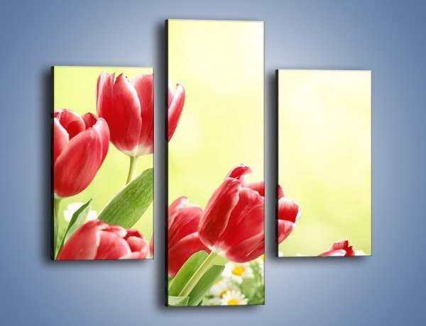 Obraz na płótnie – Polne tulipany i stokrotki – trzyczęściowy K789W3