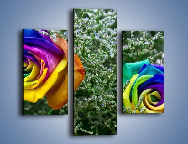 Obraz na płótnie – Kolorowe różane główki – trzyczęściowy K800W3