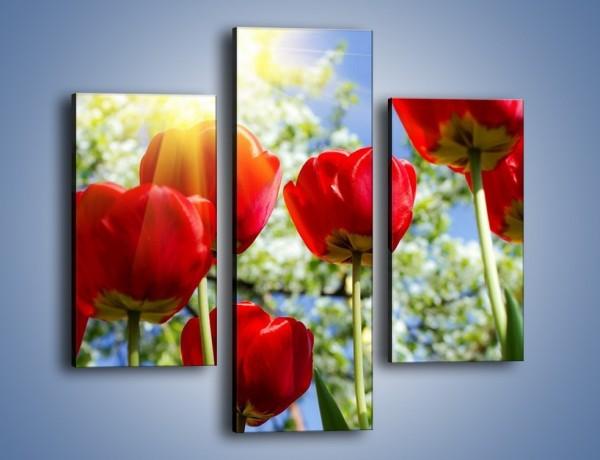 Obraz na płótnie – Słońce w kwiatowych łodygach – trzyczęściowy K865W3