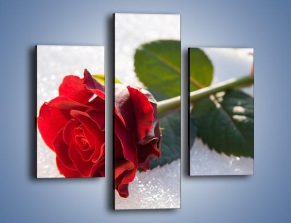 Obraz na płótnie – Gorąca róża na zmrożonej tafli – trzyczęściowy K946W3