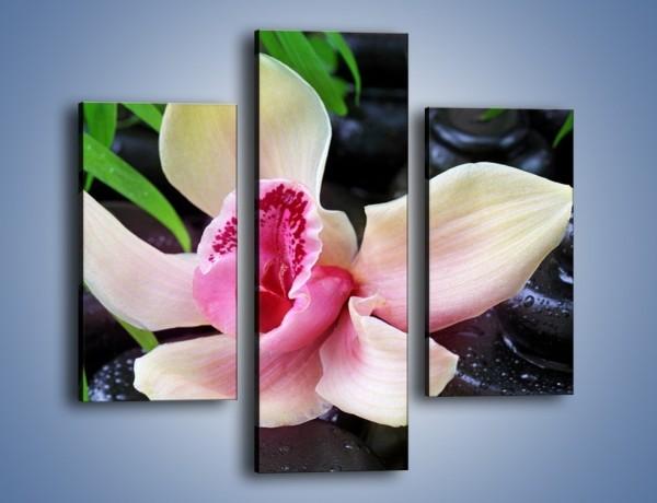 Obraz na płótnie – Cudny kwiat na pierwszym planie – trzyczęściowy K951W3