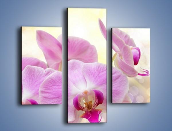 Obraz na płótnie – Lila kwiaty o poranku – trzyczęściowy K976W3