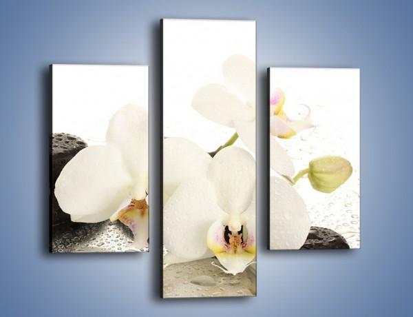 Obraz na płótnie – Mokre kwiaty i kamienie – trzyczęściowy K986W3