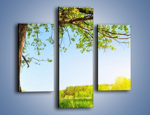 Obraz na płótnie – Drzewo na wsi – trzyczęściowy KN024W3