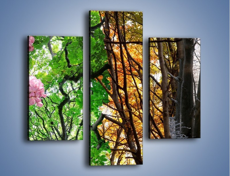 Obraz na płótnie – Drzewa w różnych kolorach – trzyczęściowy KN037W3