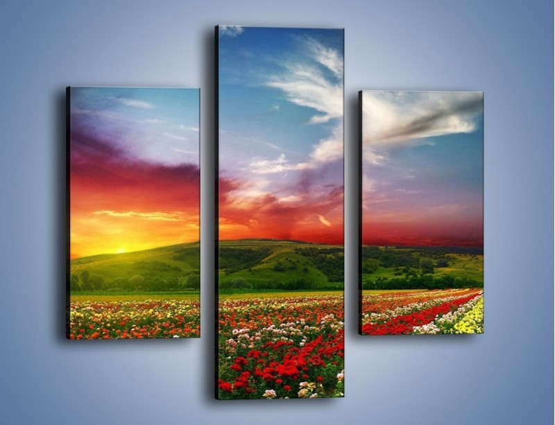 Obraz na płótnie – Uprawy kolorowych róż – trzyczęściowy KN060W3