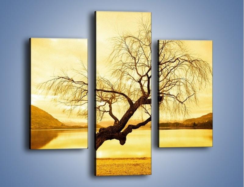 Obraz na płótnie – Pochylone drzewo w sepii – trzyczęściowy KN1033W3