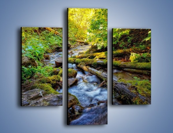 Obraz na płótnie – Drewno ścięte do wody – trzyczęściowy KN1059W3