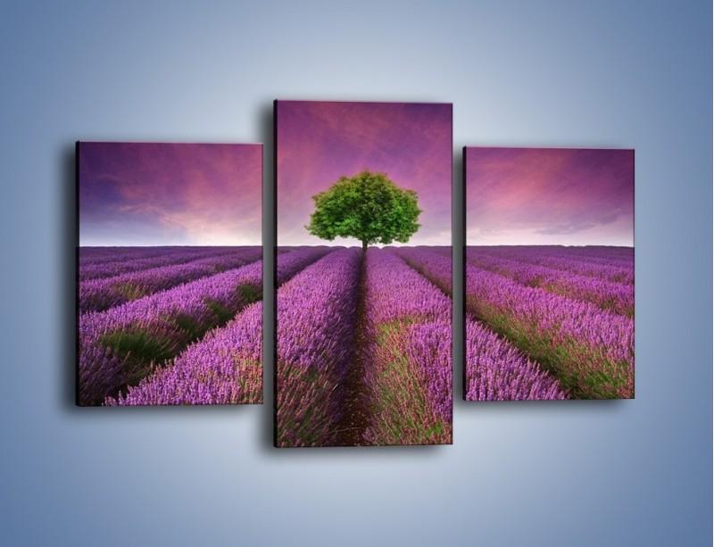 Obraz na płótnie – Droga lawendową do drzewa – trzyczęściowy KN1158AW3