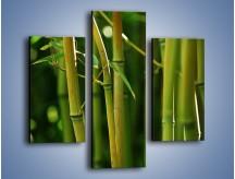 Obraz na płótnie – Bambusowe łodygi z bliska – trzyczęściowy KN118W3