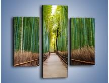 Obraz na płótnie – Bambusowy las – trzyczęściowy KN1187AW3