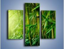 Obraz na płótnie – Bambus w roli głównej – trzyczęściowy KN1202AW3