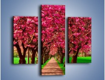 Obraz na płótnie – Aleja kwitnącej wiśni – trzyczęściowy KN1238AW3