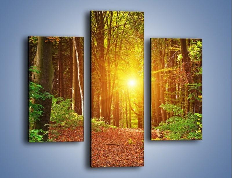 Obraz na płótnie – Polski krajobraz leśny – trzyczęściowy KN1257AW3