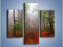 Obraz na płótnie – Budzący się lasek – trzyczęściowy KN1285AW3