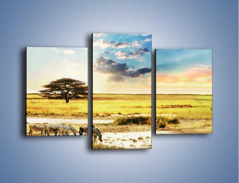 Obraz na płótnie – Zebry na sawannie – trzyczęściowy KN1298AW3