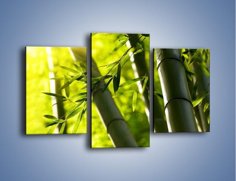 Obraz na płótnie – Twarde łodygi bambusa – trzyczęściowy KN1314AW3