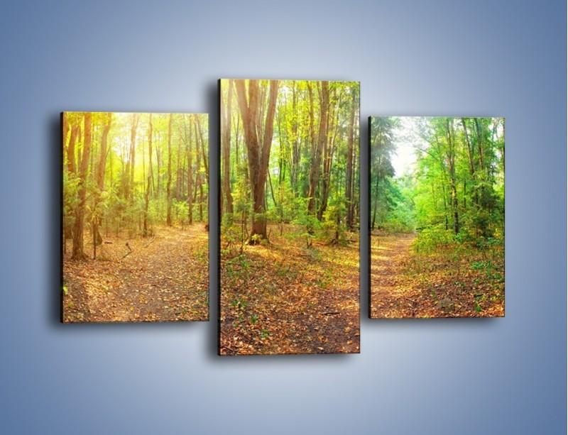 Obraz na płótnie – Przejrzysty piękny las – trzyczęściowy KN1344AW3