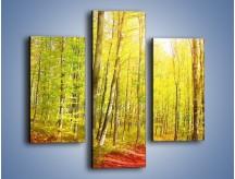 Obraz na płótnie – Brzózki liście i las – trzyczęściowy KN1345AW3